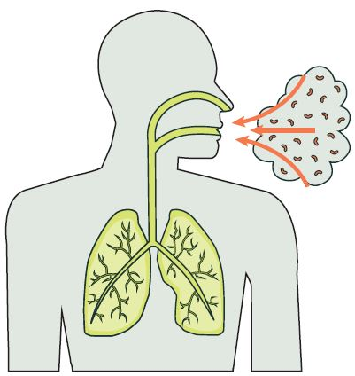 Bacteria breathed into lungs