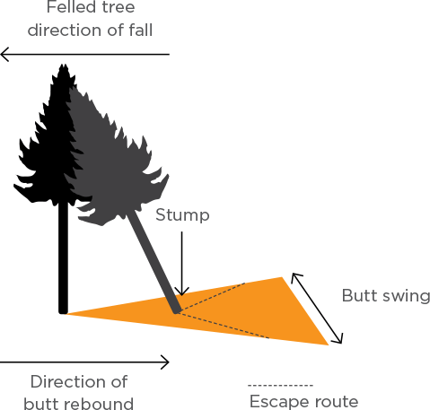 [Image] Infographic showing a felled tree hitting another tree, causing a rebound that extends into the escape route.