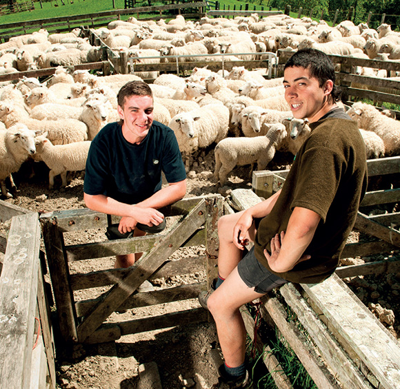 [image] A working sheep pen, two relaxed shearers sitting on a fence surrounded by sheep and lambs in pens